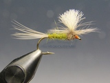 Parachute Dk.Olive