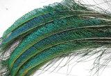 Мечевидные перья павлина Flyinspector Peacock Swords