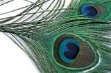 Перо павлина хвостовое Peacock Eyed tails Orvis