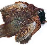 Шкура самца охотничьего фазана
