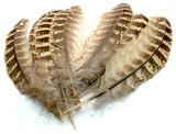 Маховые перья самки фазана Pheasant Hen Ringneck Wing Quills Natural