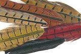 Отрезки хвостовых перьев фазана Veniard Pheasant Mixed