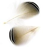 Перья древесной утки Hareline Barred Woodduck Feathers